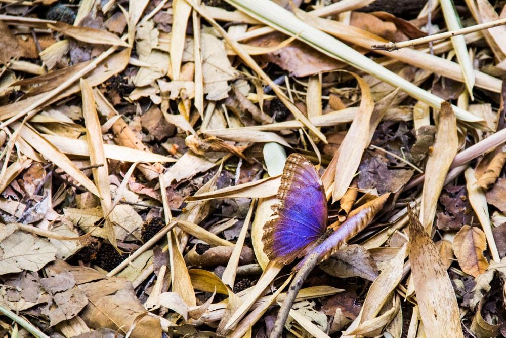 Una farfalla poggiata in terra