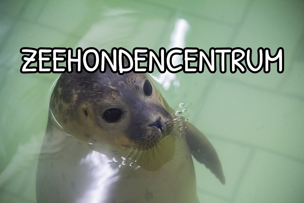 Ospedale delle foche Zeehondencentrum