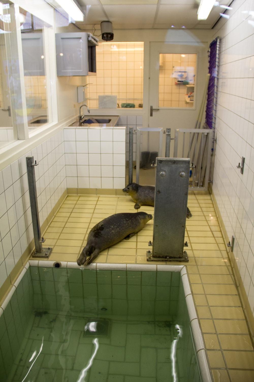 Foca in quarantena