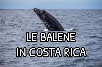 Le balene in Costa Rica