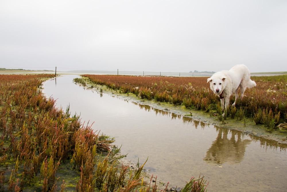 Peki a Texel nel nord dei Paesi Bassi